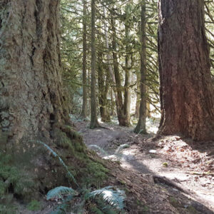 Community forest trail chilliwack - scavenger hunt